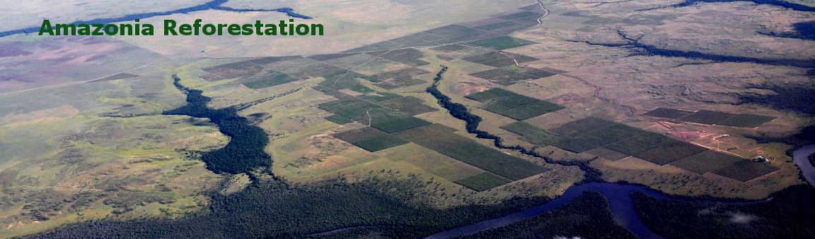 Aerial view of Amazonia Reforestation